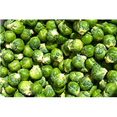 Brussel Sprouts *Excellent Quality*