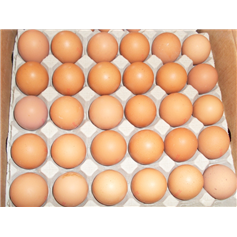 Eggs Medium Free Range - Tray of 30