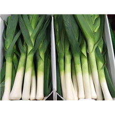 Leeks New Season
